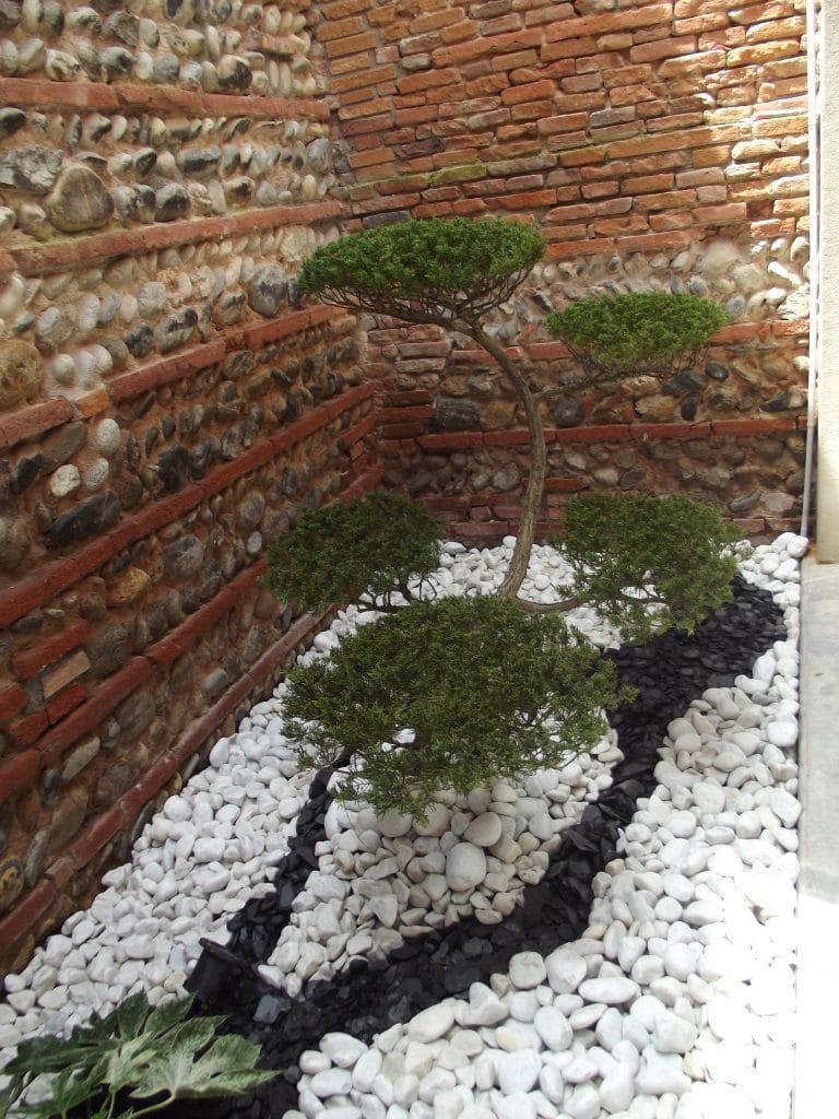 Patio avec plantes vertes