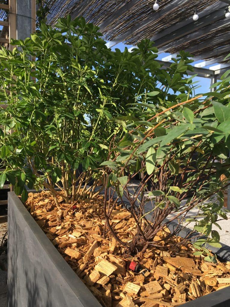 Plantes vertes dans une jardinière