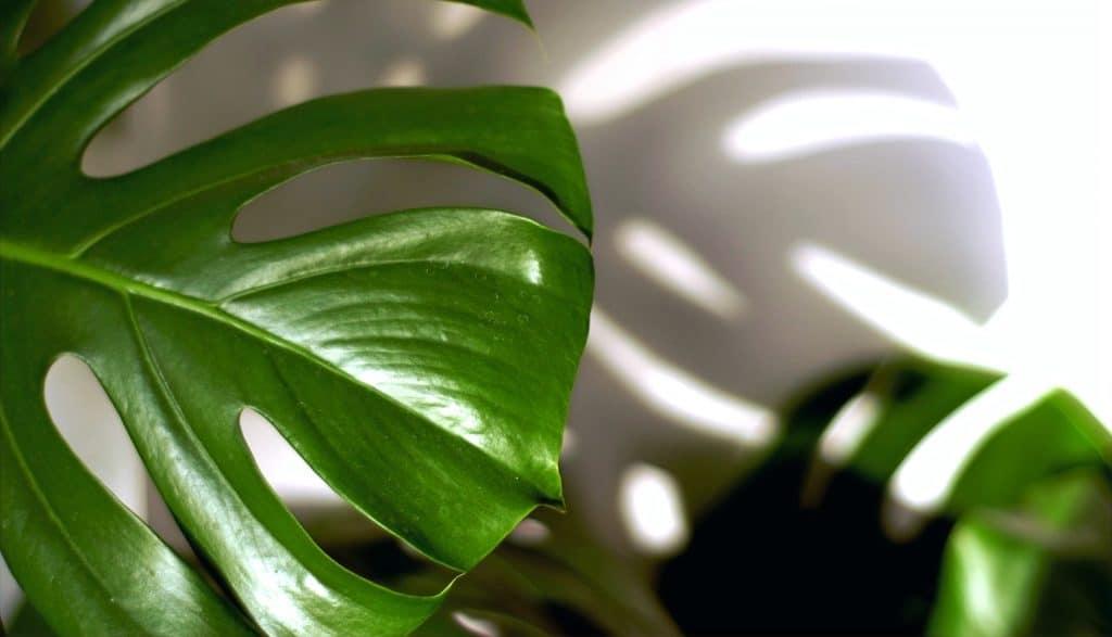 Location de plantes vertes sur Toulouse