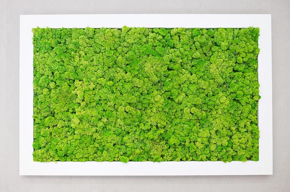 Plantes verte dans un mur végétal